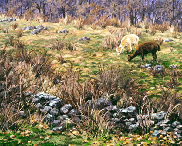 Stone Wall Alpaca, painting, Muscoot Farm
